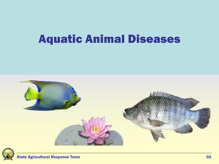 Aquatic Animal Diseases