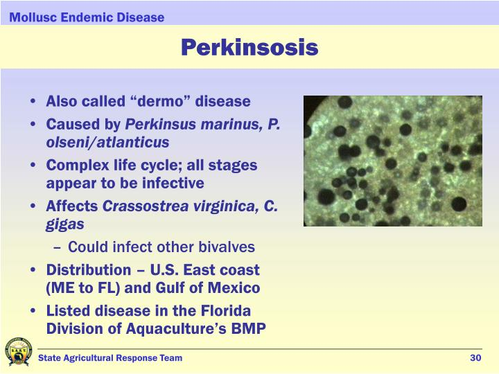 Mollusc Endemic Disease