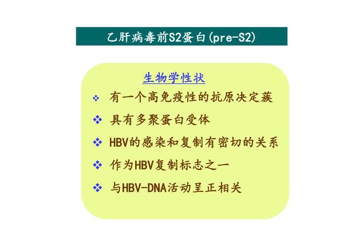 乙肝病毒前S2蛋白(pre-S2)