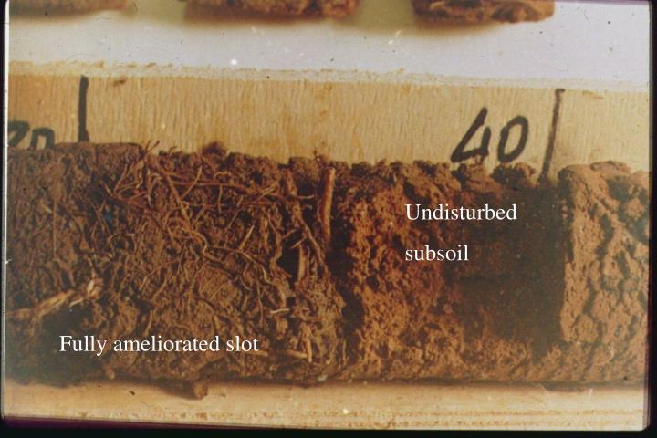 Root growth in acid soils