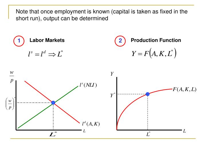 Note that once employment is known (capital is taken as fixed in the short run), output can be determined
