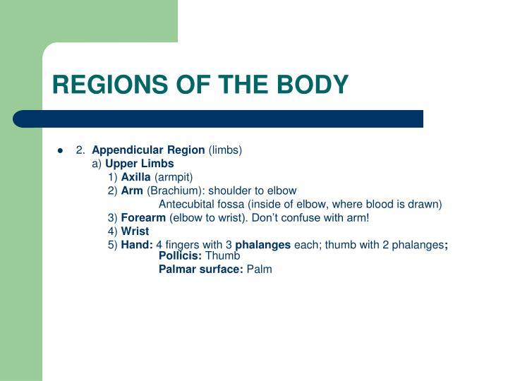 REGIONS OF THE BODY