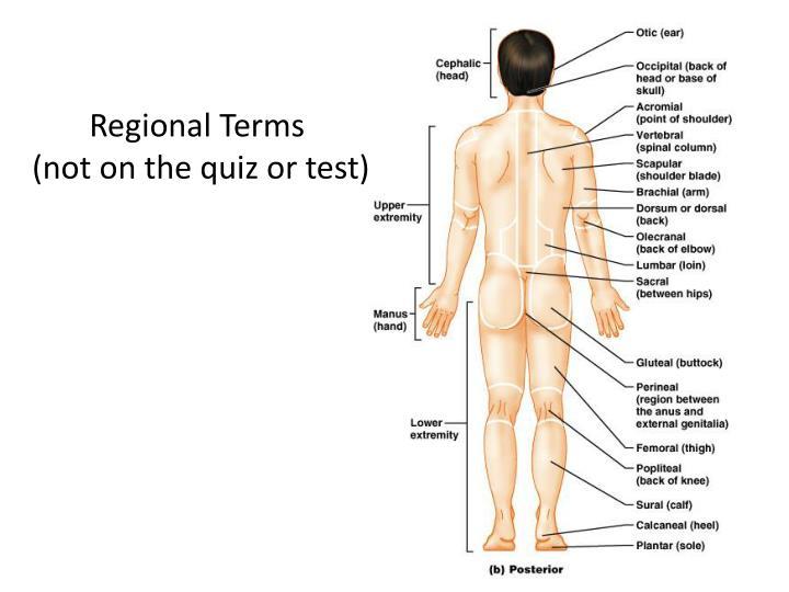 Regional Terms
