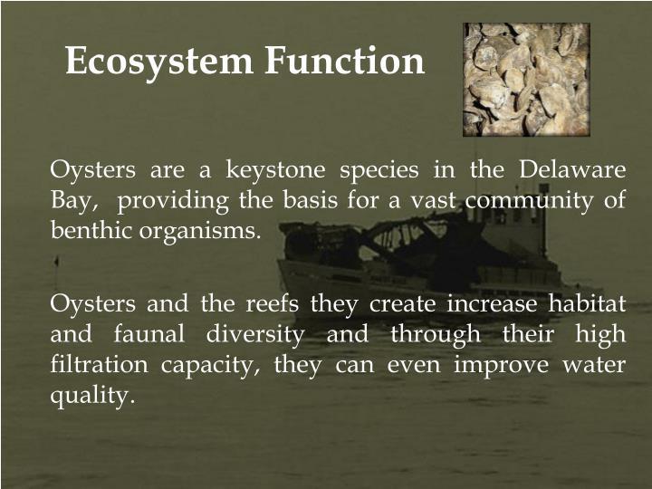 Ecosystem Function
