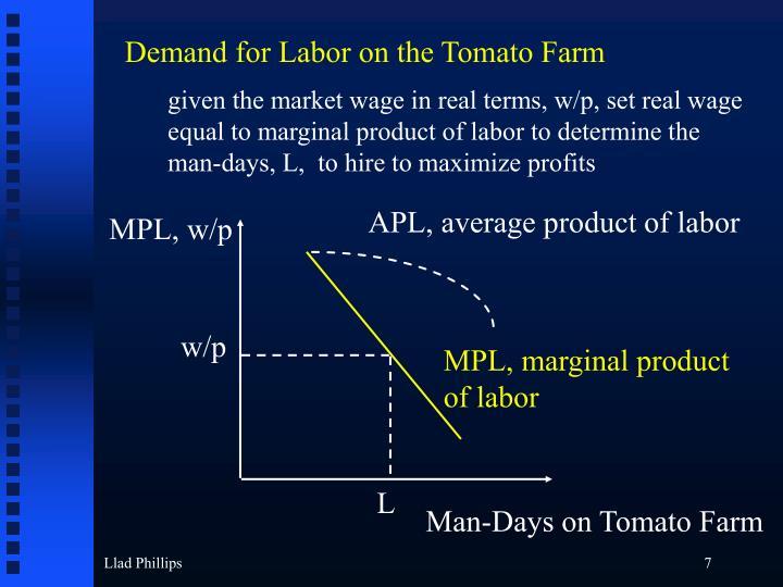 Demand for Labor on the Tomato Farm