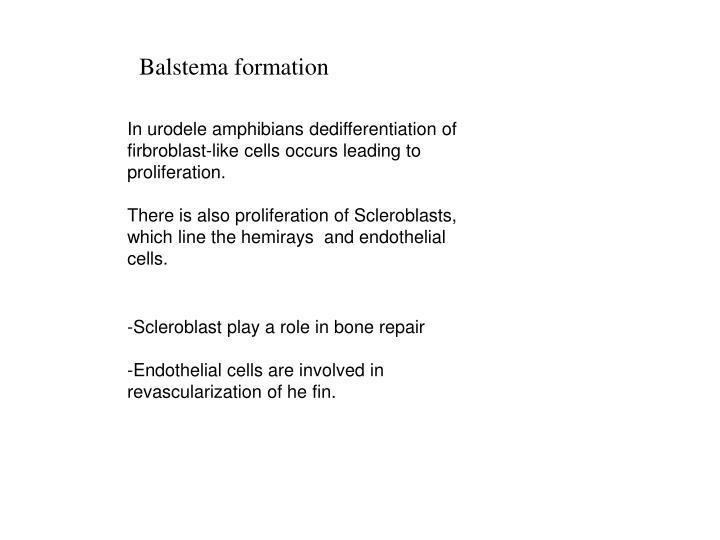 Balstema formation