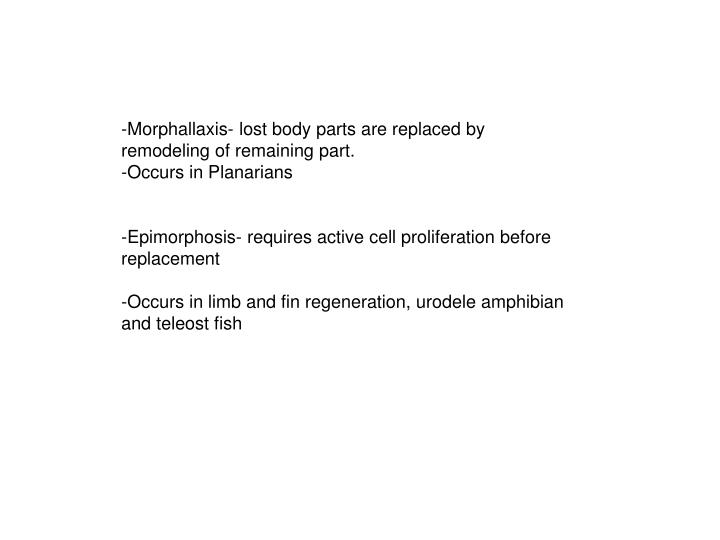 -Morphallaxis- lost body parts are replaced by remodeling of remaining part.