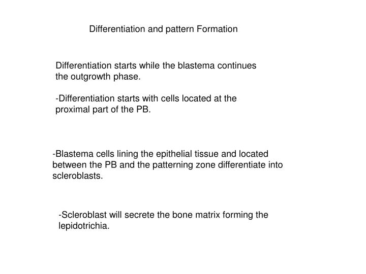 Differentiation and pattern Formation