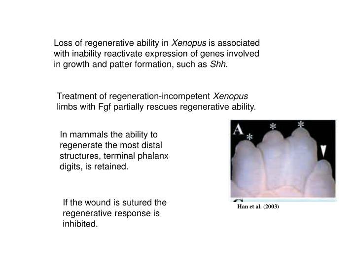 Loss of regenerative ability in