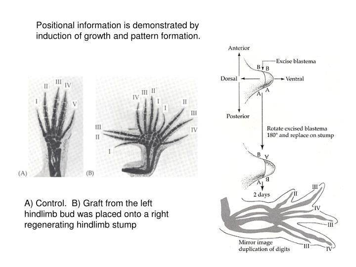 Positional information is demonstrated by induction of growth and pattern formation.