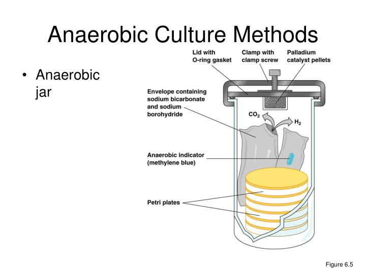 Anaerobic Culture Methods