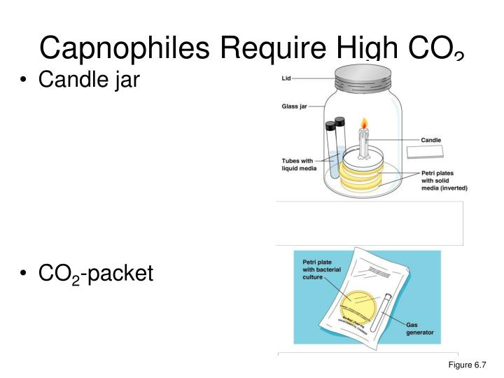 Capnophiles Require High CO