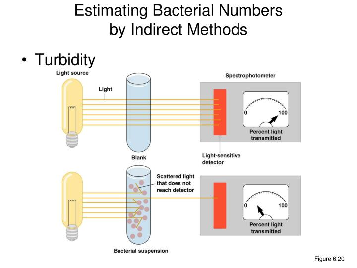 Estimating Bacterial Numbers