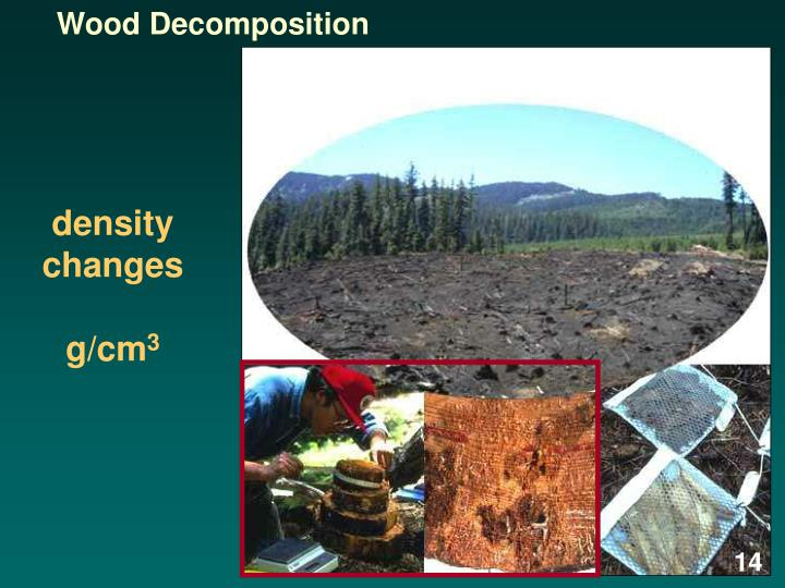 Wood Decomposition