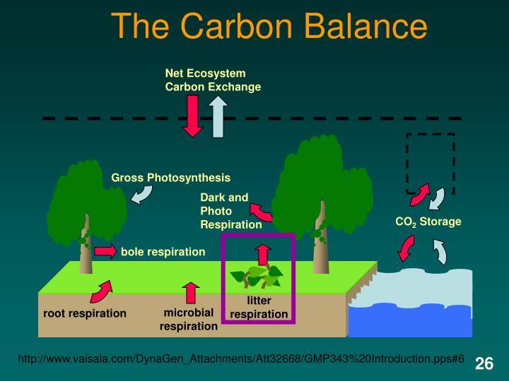 Net Ecosystem