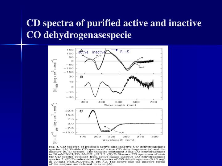 CD spectra of purified active and inactive CO dehydrogenasespecie