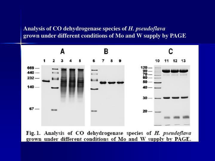 Analysis of CO dehydrogenase species of