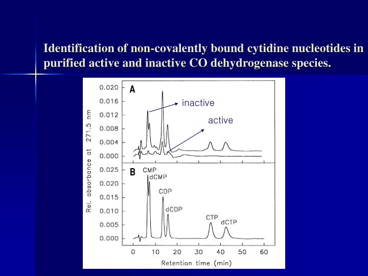 Identification of non-covalently bound cytidine nucleotides in purified active and inactive CO dehydrogenase species.