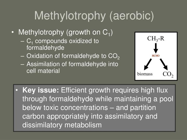 Methylotrophy aerobic