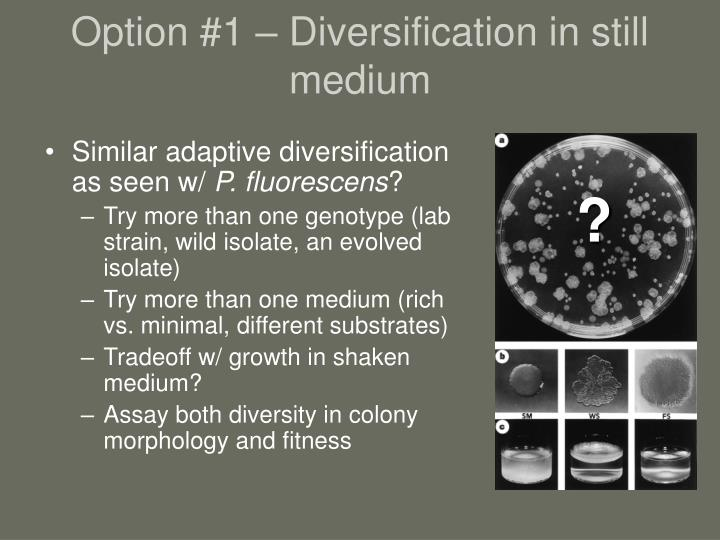 Option #1 – Diversification in still medium