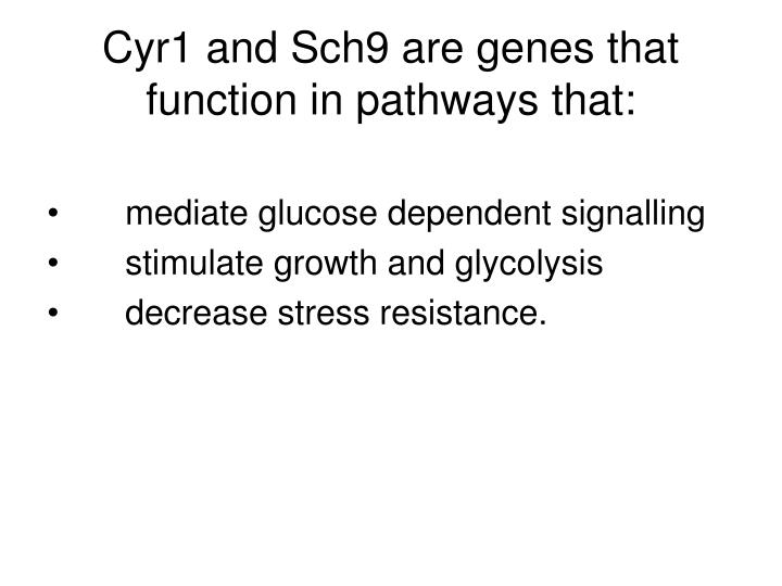 Cyr1 and Sch9 are genes that function in pathways that: