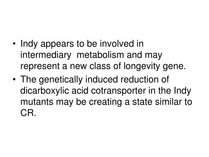 Indy appears to be involved in intermediary  metabolism and may represent a new class of longevity gene.