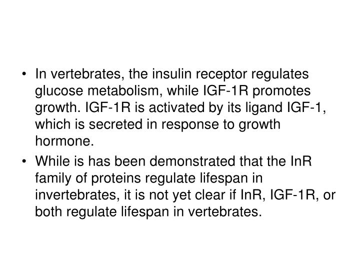 In vertebrates, the insulin receptor regulates glucose metabolism, while IGF-1R promotes growth. IGF-1R is activated by its ligand IGF-1, which is secreted in response to growth hormone.
