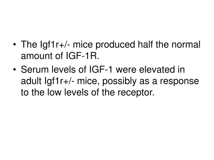 The Igf1r+/- mice produced half the normal amount of IGF-1R.