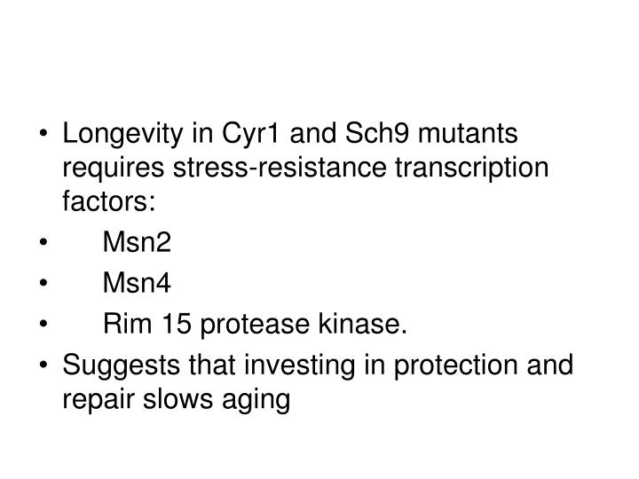 Longevity in Cyr1 and Sch9 mutants requires stress-resistance transcription factors: