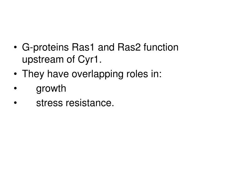 G-proteins Ras1 and Ras2 function upstream of Cyr1.