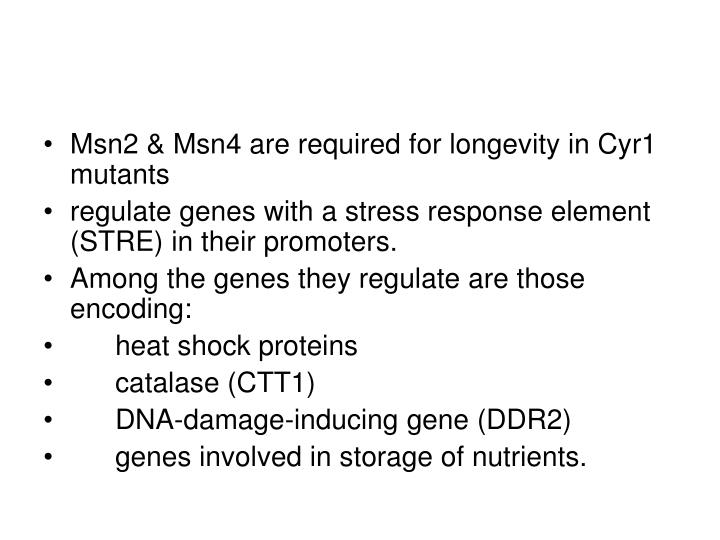 Msn2 & Msn4 are required for longevity in Cyr1 mutants