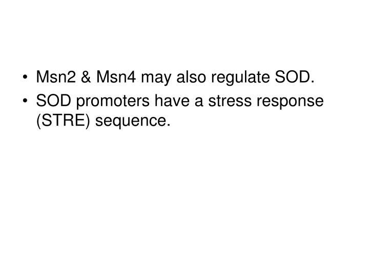 Msn2 & Msn4 may also regulate SOD.