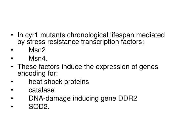 In cyr1 mutants chronological lifespan mediated by stress resistance transcription factors: