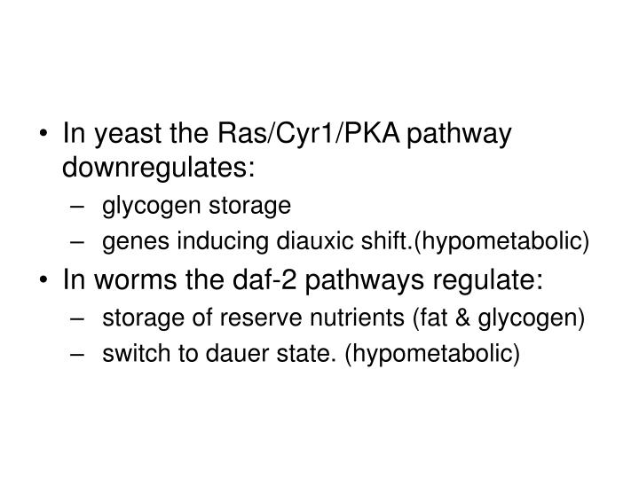 In yeast the Ras/Cyr1/PKA pathway downregulates:
