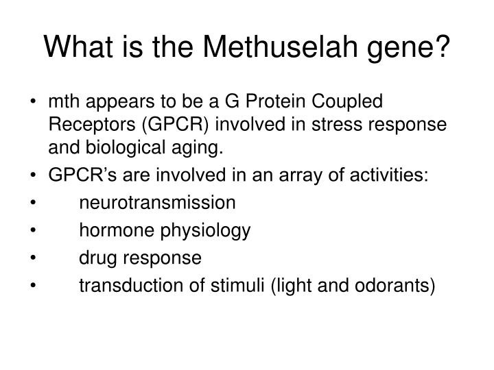 What is the Methuselah gene?