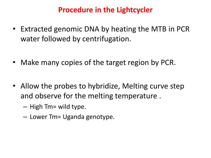 Procedure in the Lightcycler