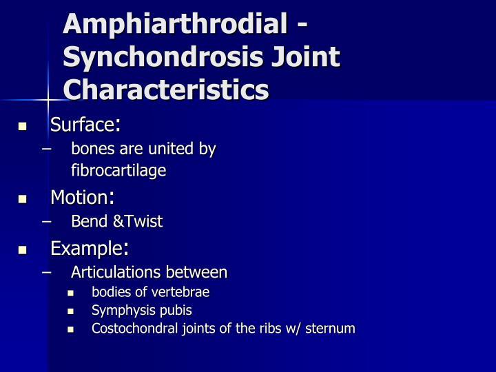 Amphiarthrodial - Synchondrosis Joint Characteristics