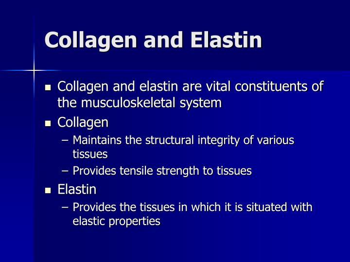 Collagen and Elastin