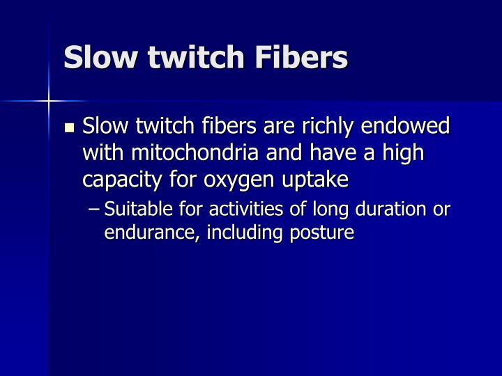 Slow twitch Fibers
