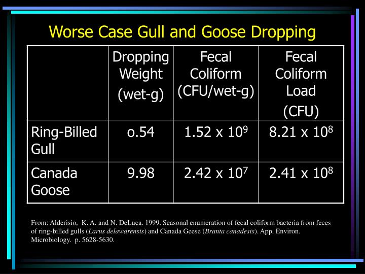 Worse Case Gull and Goose Dropping