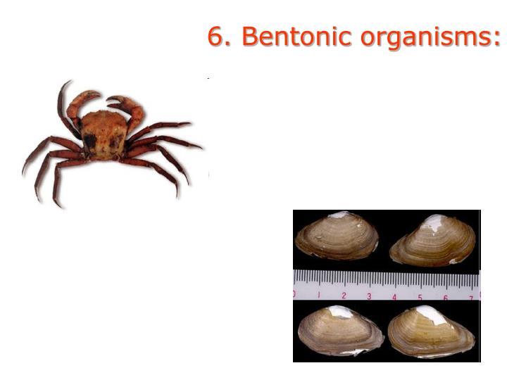6. Bentonic organisms