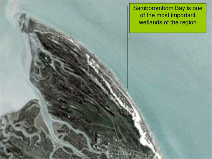 Samborombóm Bay is one of the most important wetlands of the region