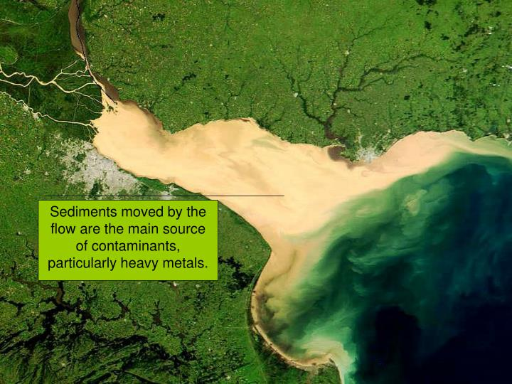 Sediments moved by the flow are the main source of contaminants, particularly heavy metals.