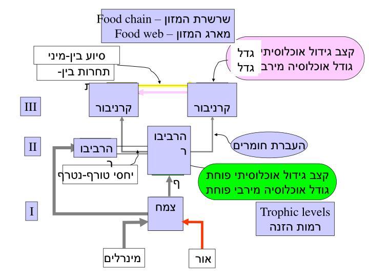 שרשרת המזון –
