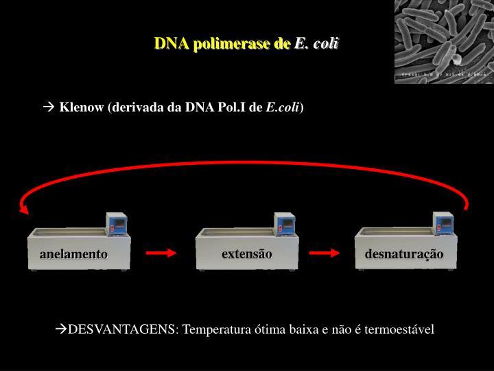 DNA polimerase de