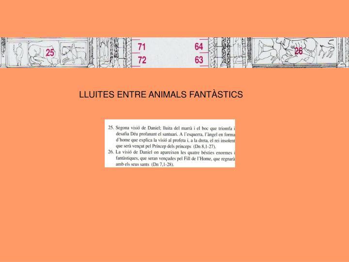 LLUITES ENTRE ANIMALS FANTÀSTICS