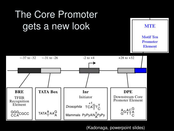 The Core Promoter gets a new look