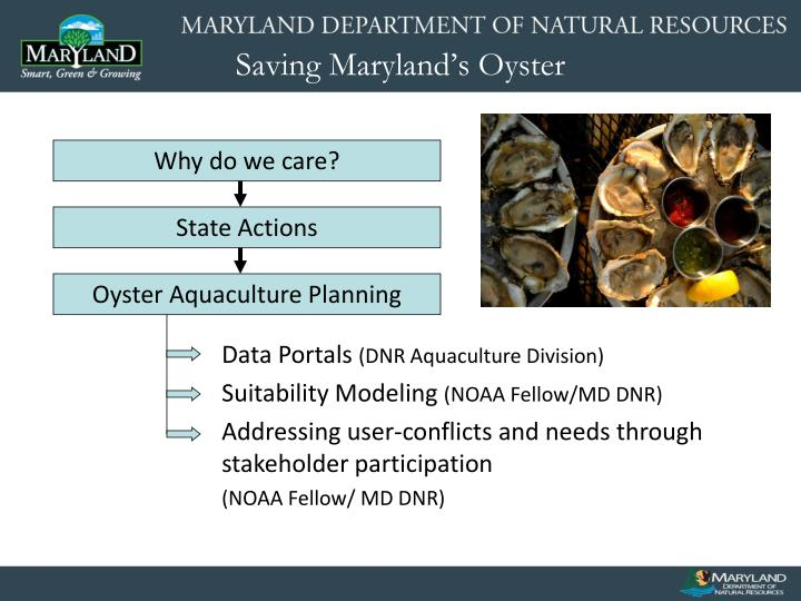 Saving maryland s oyster