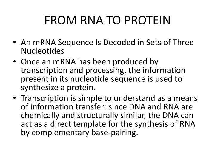 FROM RNA TO PROTEIN