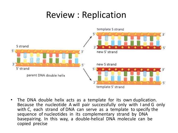 Review : Replication
